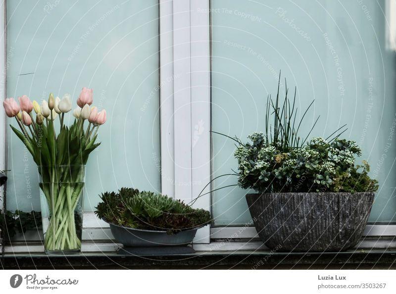 Abendlicht, vor dem Fenster Topfpflanzen Tulpenstrauß Vase Stimmung Frühling Vorstadt trist zuhause grün