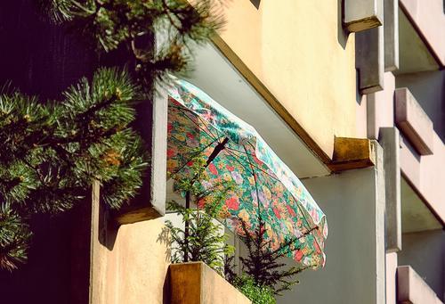 Balkon,  Balkonien.... Vorstadt, Frühlingsstimmung, Sonnenschein, schönes Licht Balkonpflanze Nadelbaum Nadelgehölz Frühlingsgefühle besonders Hochhaus
