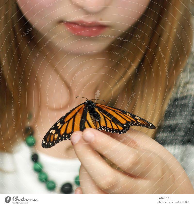 Trockne kleiner Freund! Mensch feminin Kind Mädchen Haut Kopf Haare & Frisuren Gesicht Nase Mund Lippen Hand Finger Umwelt Natur Tier Schmetterling Flügel 1 nah
