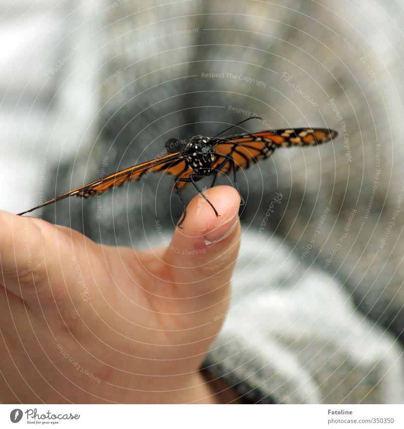 Hallo kleiner Freund! Mensch Kind Hand Finger Umwelt Natur Tier Schmetterling Flügel 1 frei nah natürlich Fühler Farbfoto mehrfarbig Nahaufnahme Detailaufnahme