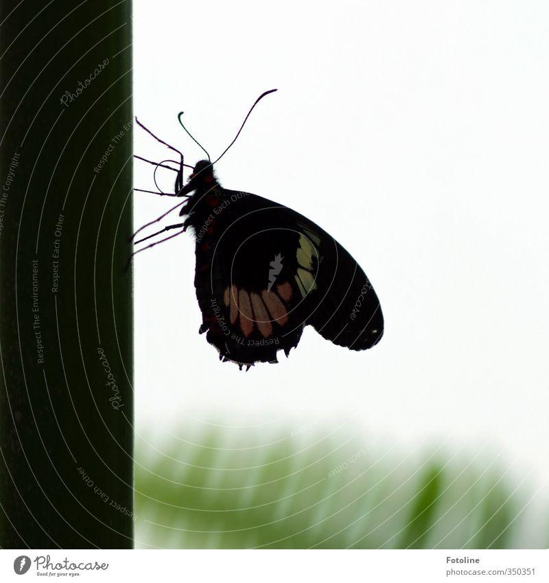 Verschnaufpause Umwelt Natur Tier Schmetterling Flügel 1 hell klein nah natürlich schön Farbfoto Gedeckte Farben Menschenleer Tag Licht Silhouette