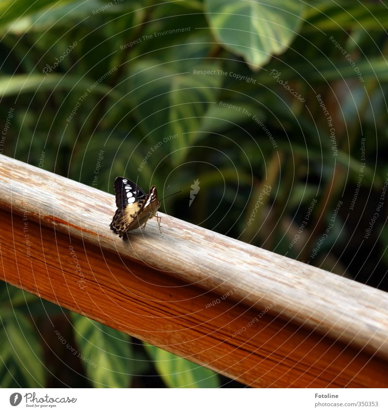 Verschnaufpause Natur grün schön Pflanze Tier Blatt Umwelt klein Garten natürlich braun Park frei Flügel Schmetterling exotisch
