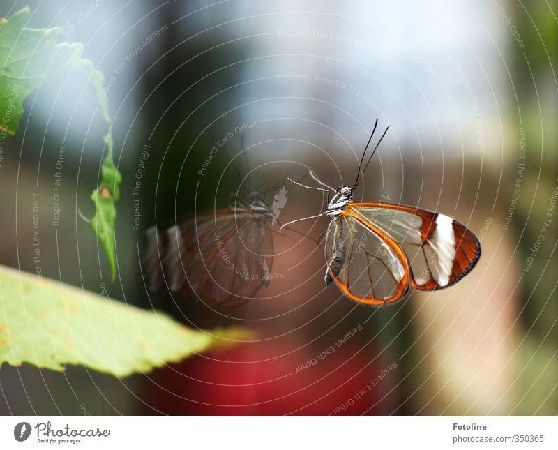 Spieglein, Spieglein an der Wand... Natur grün schön Pflanze Tier Blatt Umwelt natürlich braun Glas ästhetisch Schmetterling Scheibe