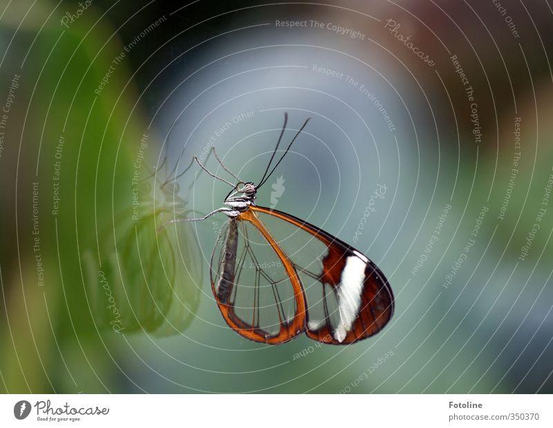 Flügel aus Glas Natur Tier natürlich Wildtier Glas Flügel nah Schmetterling Fühler Glasscheibe