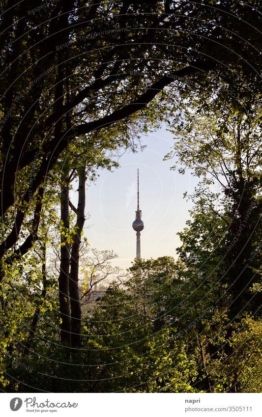 Sicht auf Berliner Fernsehturm am Horizont durch Lücke im Gebüsch . Alex Wahrzeichen Stadt Hauptstadt Sehenswürdigkeit Tourismus Deutschland Park Bäume Mitte
