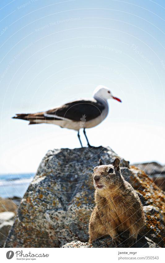 Strandhörnchen Natur blau Pflanze Meer Landschaft ruhig Tier Freiheit Küste grau braun Wildtier Zufriedenheit Perspektive niedlich