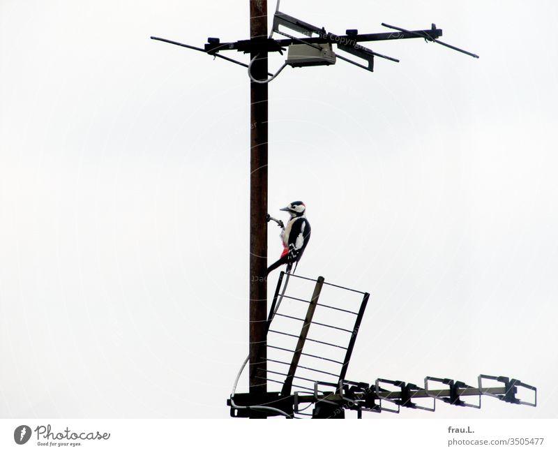 Der Buntspecht war ein bisschen verwirrt, wohl wieder eine dieser unsäglichen Antennen, murmelt er frustriert. Dach Stadt Menschenleer Außenaufnahme Tag