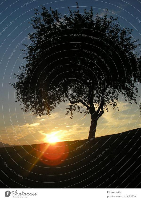 und die sonne geht unter... Sonnenuntergang Baum Apfelbaum Licht Wiese Alm Romantik rot Berge u. Gebirge blau