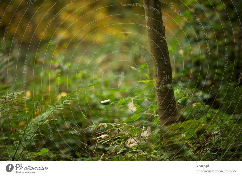 Veränderung Umwelt Natur Pflanze Sonnenaufgang Sonnenuntergang Sonnenlicht Sommer Herbst Klimawandel Schönes Wetter Regen Baum Farn Wildpflanze Baumstamm Park