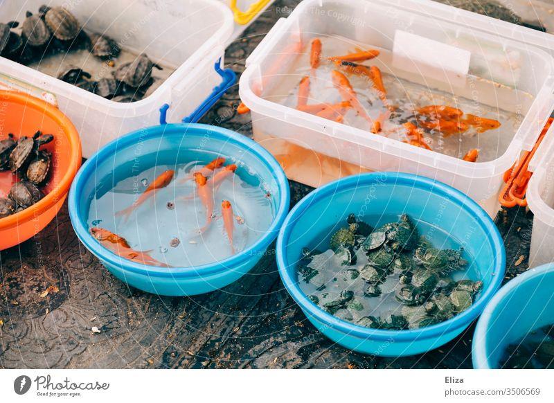 Eimer und Schüsseln mit Wasser und lebenden Tieren, Fischen, Schildkröten gefüllt Verkauf verkaufen Vietnam Straßenrand bunt Tierhandlung nicht artgerecht