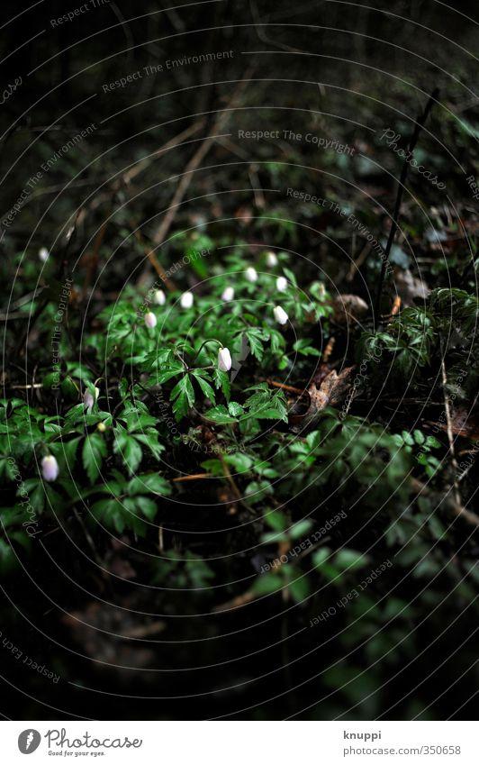 nur nicht den Kopf hängen lassen Umwelt Natur Erde Wasser Wolken Sonnenlicht Herbst Wetter schlechtes Wetter Unwetter Nebel Regen Pflanze Blume Blatt Blüte