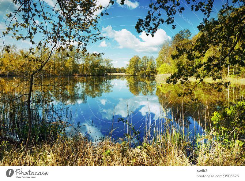 Wasserspiegel See Idylle Panorama (Aussicht) Pflanze Himmel windstill Natur Landschaft Reflexion & Spiegelung Außenaufnahme Menschenleer Farbfoto Umwelt Seeufer