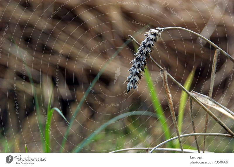 abhängen Umwelt Natur Pflanze Urelemente Erde Sonnenlicht Herbst schlechtes Wetter Regen Gras Sträucher Blatt Blüte Nutzpflanze Wildpflanze Wiese Feld alt