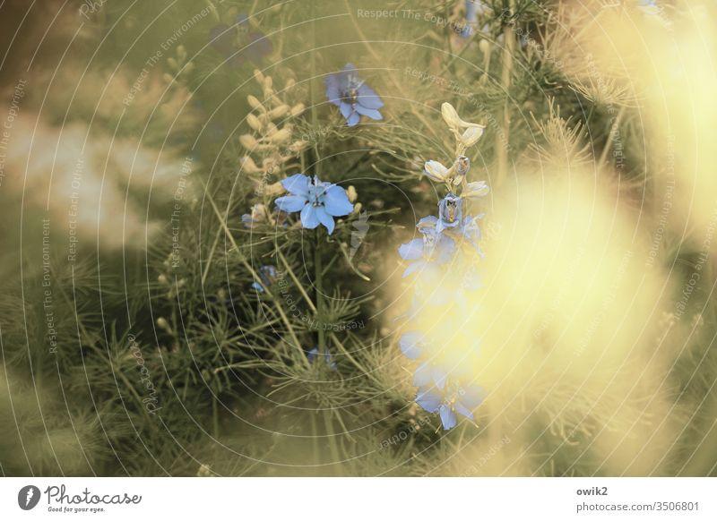 Grünland Garten Wiese Blumenwiese Blütenpflanze blühen Farbfoto Sommer Blühend grün Gras blau geb friedlich sonnig Unschärfe Lupinen schemenhaft