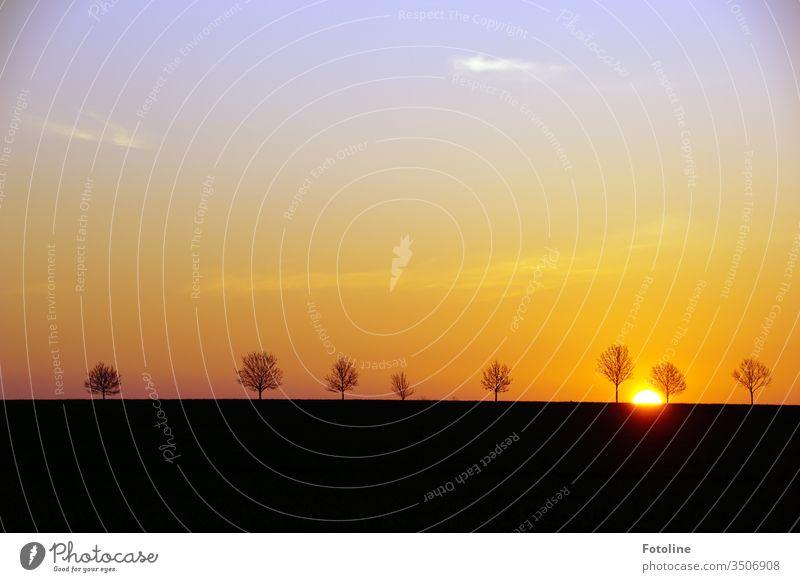 Ein neuer Tag beginnt - oder die Sonne geht langsam auf und taucht die einzelstehenden Bäume und die Umgebung in umwerfende Farben Sonnenaufgang Morgen Licht