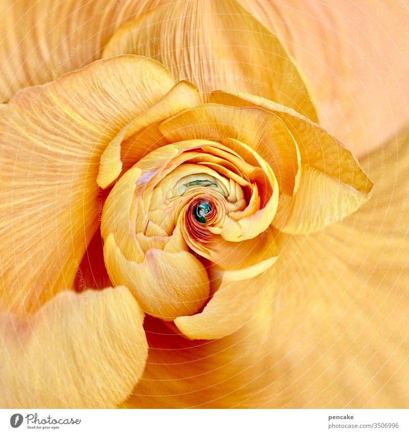 haute couture | pretty in yellow gelb Blüte Blume Makroaufnahme Detailaufnahme Blütenblatt Nahaufnahme schön Sommer frisch Natur Hintergrundbild Wachstum