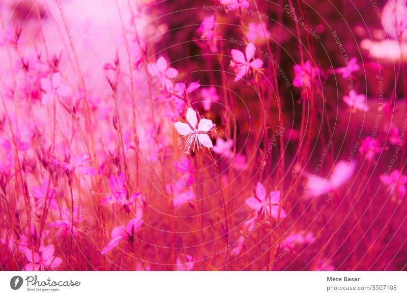 Winzige rosa Blüte in der Menge, scheu und leuchtend. winzig Single Haufen Blumen Hintergrund digital manipuliert Solitär Einsamkeit anders ausgezeichnet