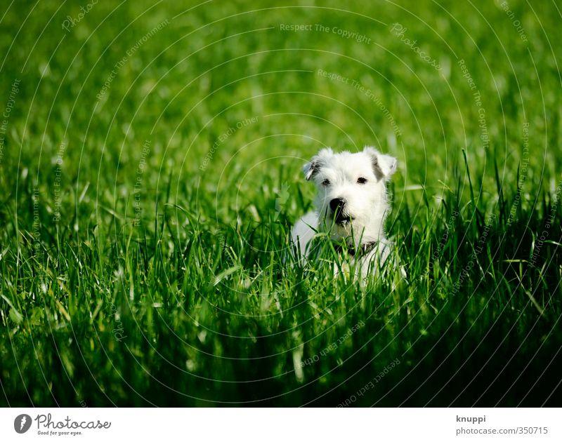 Frostie VII Hund Natur grün weiß Sommer Pflanze Erholung ruhig Tier schwarz Wiese Tierjunges Gras Glück Feld wild