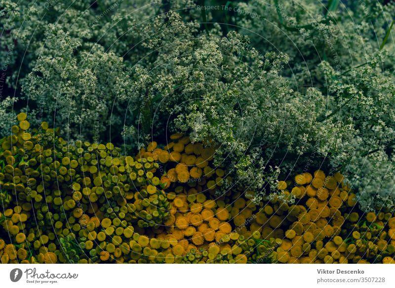 Hintergrund der Wildblumen Sommerblumen Blume Hochzeit Design geblümt Baum Wasser Liebe Silhouette Muster Roséwein Ornament Textur Natur Sonne Blatt Frühling