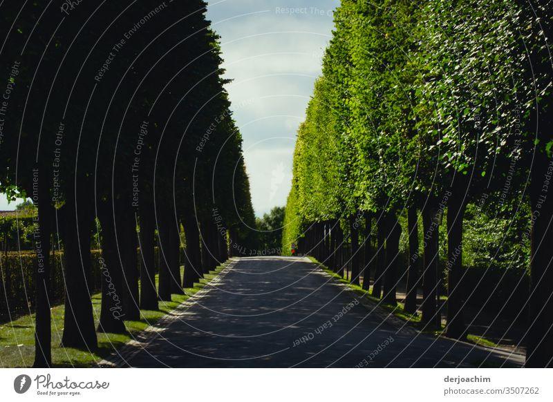 Ganz lange Baum Allee. Mit blauem Himmel. Sonneschein und Schatten.Im Hintergrund ein Fußgänger mit roter Jacke . Eremitage- Bayreuth Straße Farbfoto