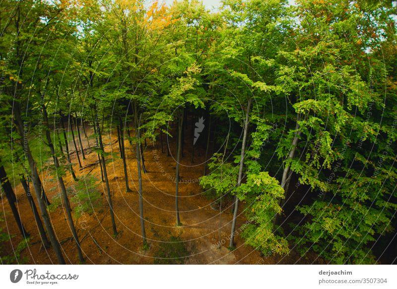 Blick in den  Wald von oben.Die Sonne scheint und alles ist Grün. Baum Natur grün Blatt Ast Baumstamm Baumkrone Baumrinde Blätterdach Wachstum Außenaufnahme