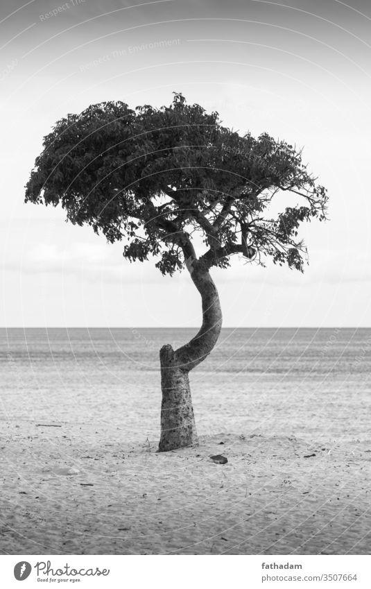 Einsamer Baum am Strand schwarz auf weiß Meer Küste Sand Ferien & Urlaub & Reisen Wellen Sommer Einsamkeit Kuba Varadero
