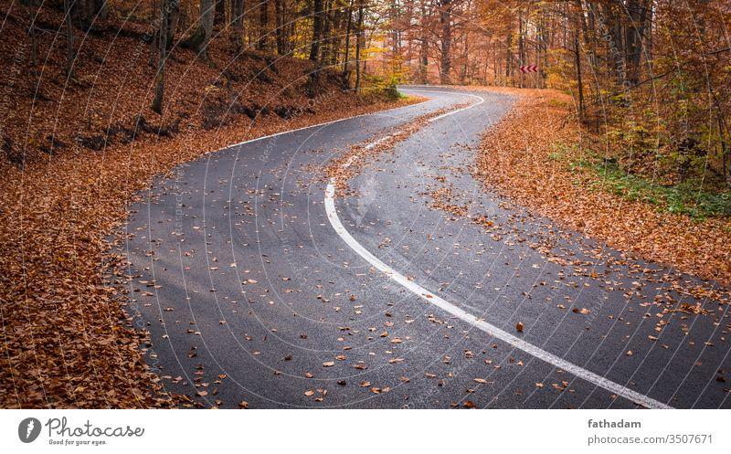 Leere, kurvenreiche Straße in einem schönen Herbstwald Route Blätter Herbstlaub Herbstgefühl Natur leer Kurve Freiheit Landschaft Umwelt fallen Wald
