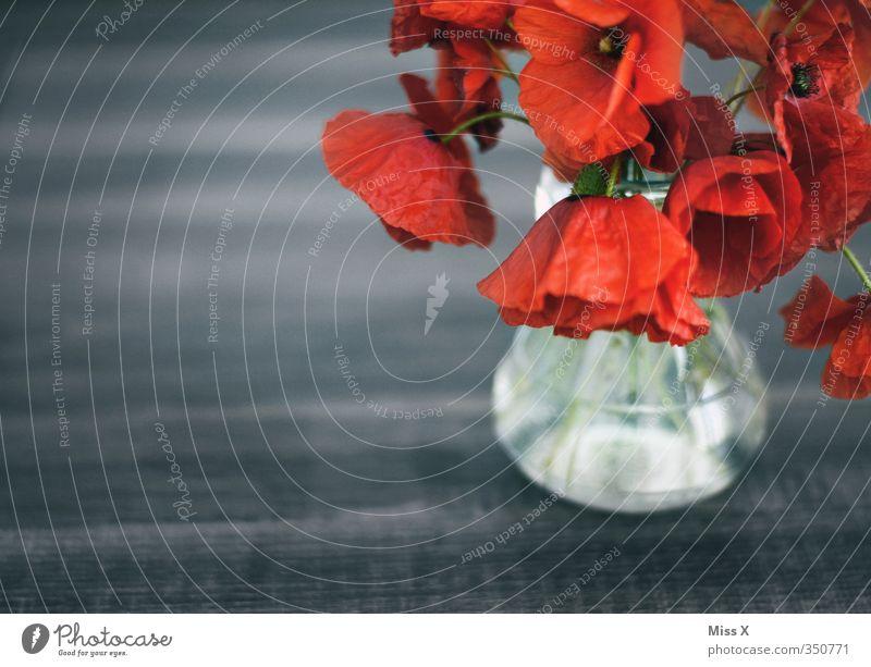 Mohn Dekoration & Verzierung Blume Blüte verblüht dehydrieren rot Gefühle Stimmung Traurigkeit Trauer Verfall Vergänglichkeit Blumenstrauß schlaff Vase Farbfoto