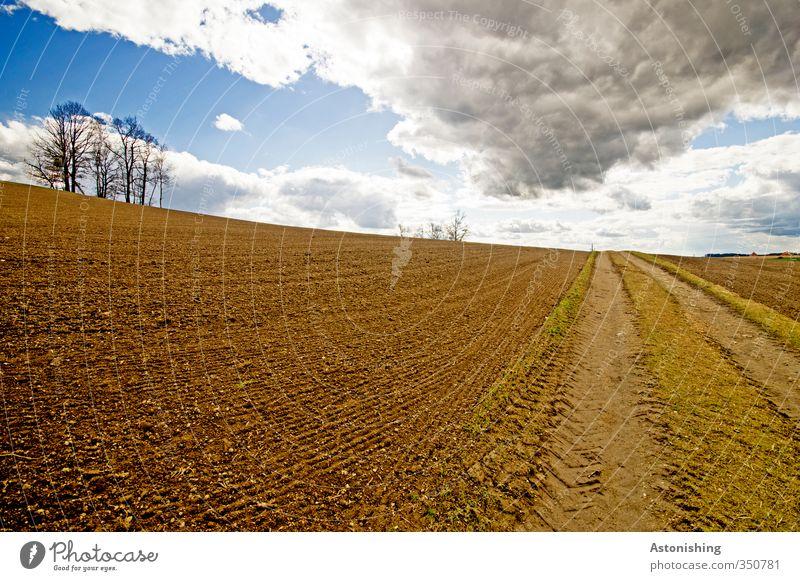 Acker Umwelt Natur Landschaft Pflanze Luft Himmel Wolken Gewitterwolken Horizont Sonne Herbst Wetter Schönes Wetter Wärme Baum Gras Wiese Feld Hügel