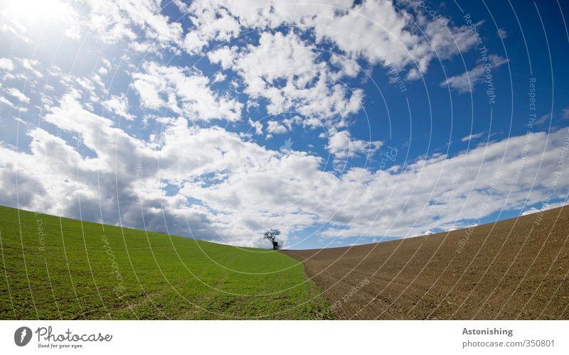 der kleine Baum II Umwelt Natur Landschaft Pflanze Himmel Wolken Horizont Sonne Frühling Wetter Schönes Wetter Wärme Gras Nutzpflanze Wiese Feld Hügel stehen