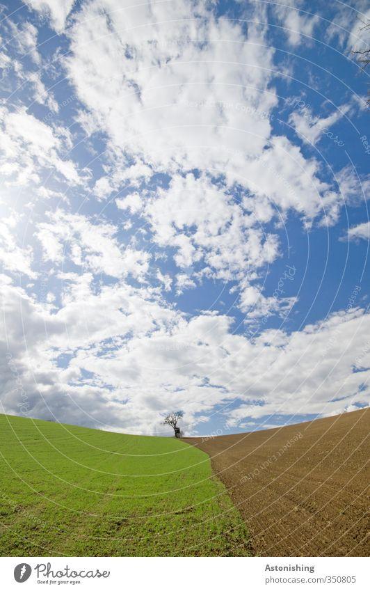 der kleine Baum I Umwelt Natur Landschaft Pflanze Himmel Wolken Horizont Frühling Wetter Schönes Wetter Gras Wiese Feld Hügel stehen blau braun grün weiß