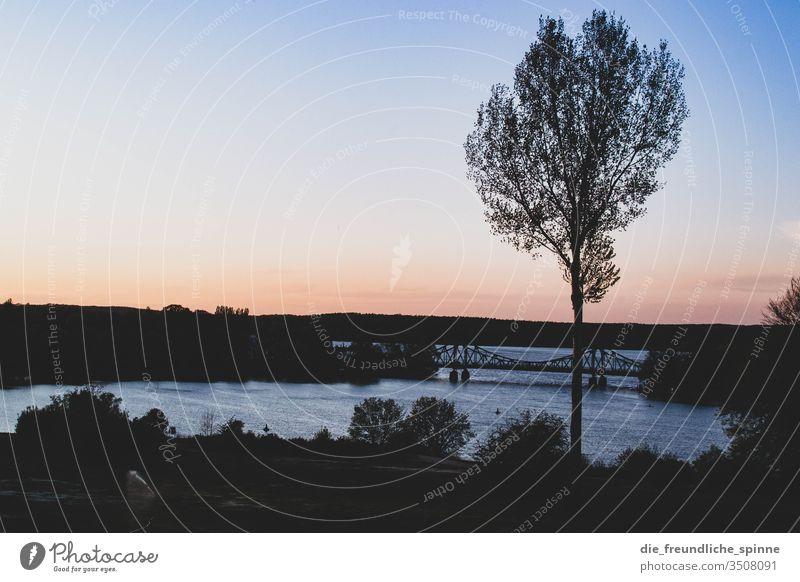 Glienicker Brücke Potsdam Babelsberg Berlin Schloss Babelsberg Sonnenuntergang Baum Gegenlicht Himmel Außenaufnahme Potsdam-Babelsberg Licht Schatten Park Abend
