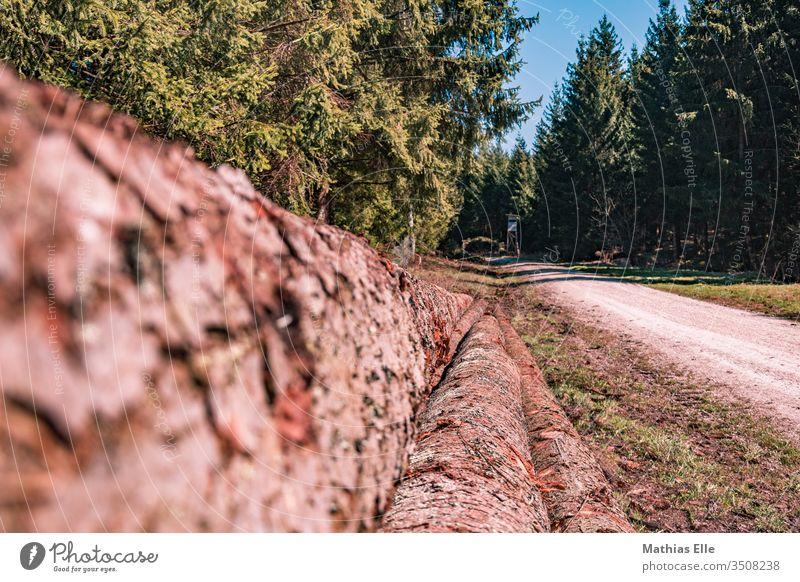 Baumstämme am Waldweg Fichtenwald Landschaftspflege Natur Umwelt nachhaltig Holz Baumstamm Nadelwald authentisch Menschenleer Außenaufnahme Gedeckte Farben