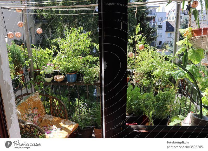 grüne Balkon Oase Balkonpflanze Balkonblumen Balkonbepflanzung Topfpflanze Balkongeländer Sommer Idylle sommerlich gemütlich zuhause zuhause bleiben
