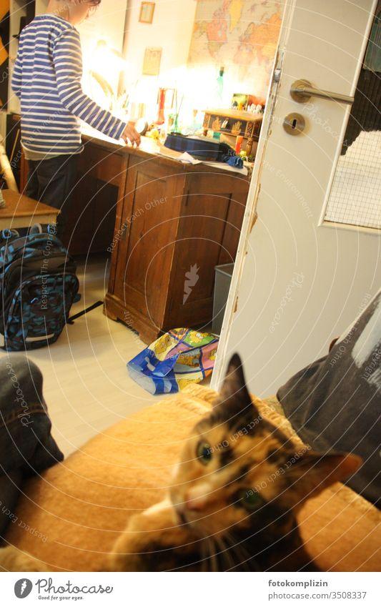 Kind am Schreibtisch mit Katze im Vordergrund Schulkind schulkindalter Kindheit Schule lernen Hausaufgabe Bildung Schüler Haustier Kindererziehung Kinderzimmer