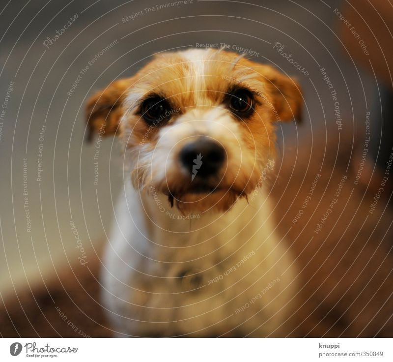 *.* Hund weiß Sommer Tier schwarz Tierjunges feminin lustig grau Gesundheit natürlich braun Zufriedenheit warten Fröhlichkeit niedlich