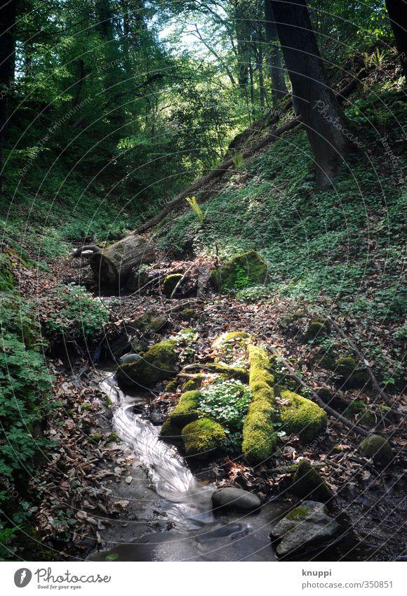Spot an! Natur grün Wasser weiß Sommer Pflanze Sonne Baum Landschaft Blatt schwarz Wald Umwelt Wärme Frühling Gesundheit