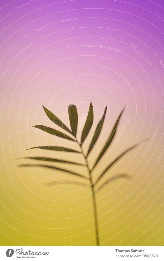 Blätter einer kleinen grünen Pflanze auf einem Gradientenhintergrund natürlich Lichterscheinung Lichtstimmung Hintergrund neutral Schwache Tiefenschärfe