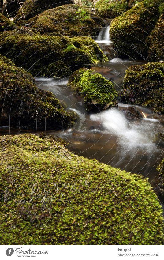 stream Umwelt Natur Pflanze Urelemente Erde Luft Wasser Wassertropfen Sonnenlicht Frühling Sommer Klimawandel Wetter Schönes Wetter Regen Wärme Moos Wildpflanze