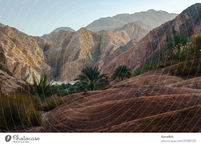 Berglandschaft mit Palmen und Pflanzen in der Wüste von Ägypten Dahab blau Blauer Himmel Sträucher Wolken Tag wüst trocknen Gras grün hoch heiß Landschaft