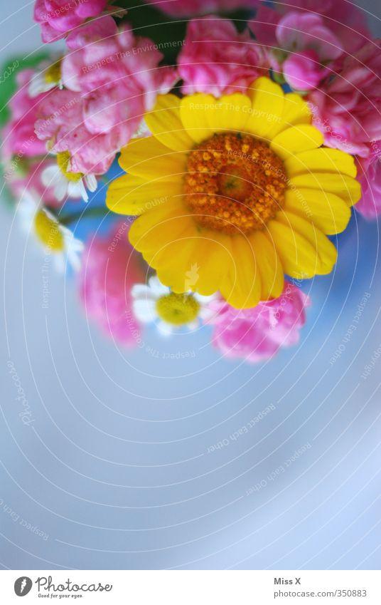 Blumenrahmen Frühling Sommer Blüte Blühend Duft mehrfarbig Sommerblumen Rose Blumenstrauß rosa Hintergrund neutral Hintergrundbild gelb Farbfoto Nahaufnahme