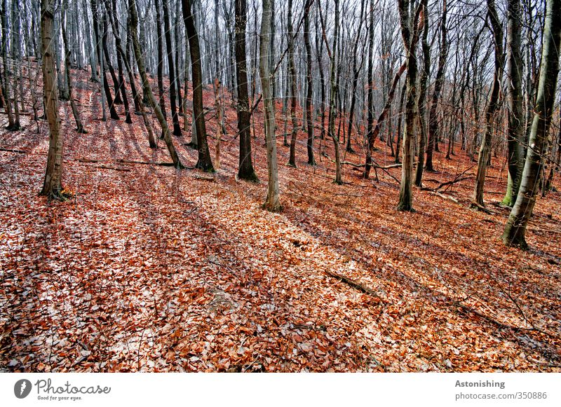 Herbstwald Umwelt Natur Landschaft Pflanze Himmel Sonne Sonnenlicht Frühling Wetter Schönes Wetter Wärme Baum Blatt Wald Hügel stehen dünn hoch rot schwarz