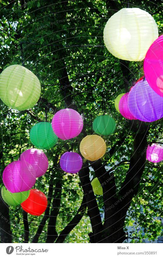 Lampion Baum Beleuchtung Feste & Feiern Lampe Party Garten Geburtstag Häusliches Leben leuchten Fröhlichkeit Dekoration & Verzierung Sommerurlaub Lampion Nachtleben Gartenfest Strandbar