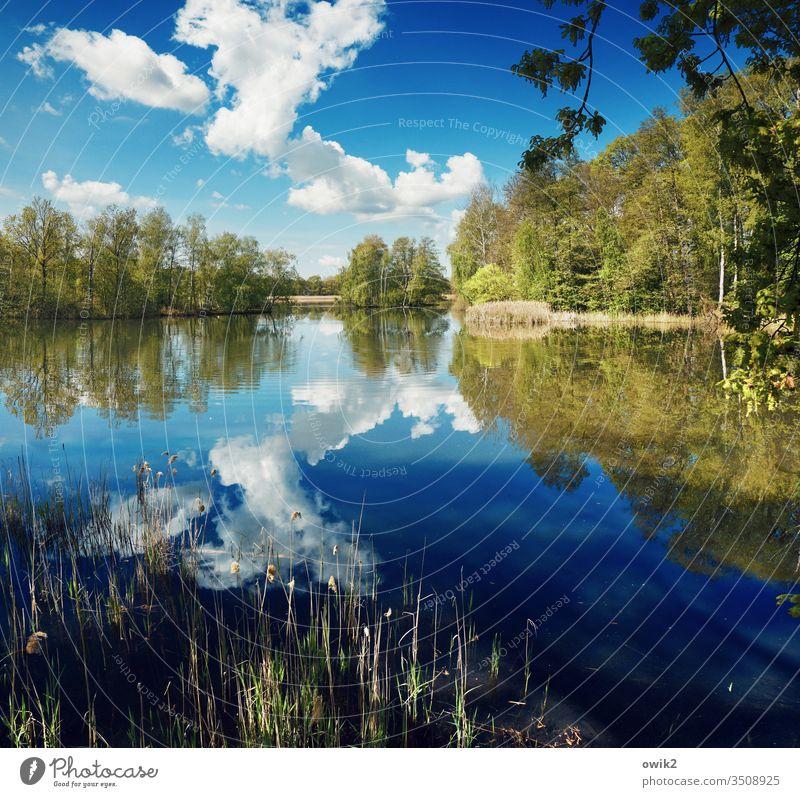 Frühling und draußen See Seeufer Wasser Wasseroberfläche Weite Windstille Natur Außenaufnahme Menschenleer Reflexion & Spiegelung Landschaft Farbfoto ruhig