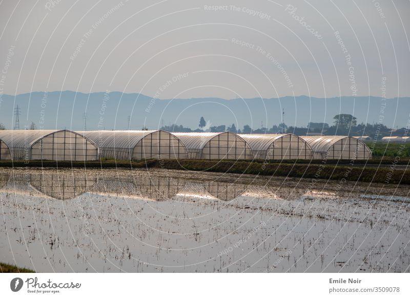 Reisfelder mit Gewächshäusern im Hintergrund Japan Feld Landwirtschaft Ackerbau Aso