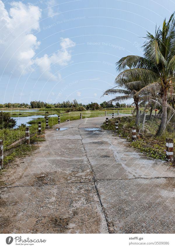 Straße durch Reisfelder mit Palmen Vietnam Hoi An Fahrbahn Wege & Pfade Handflächen Natur Landschaft Asien entdecken erkunden Reisefotografie reisen
