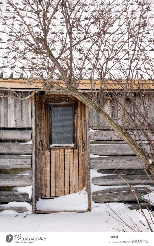Versteckte Hütte mit verschlossener Tür Idylle Einsamkeit einfach Klischee Schnee verdeckt idyllisch Stille Alleinsein zurückgezogen Winter Landschaft kalt