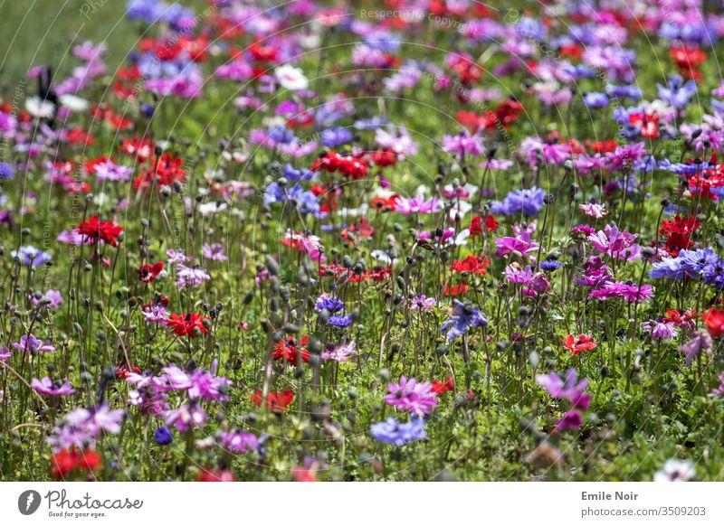 Bunte Blumenwiese Wiese bunt natur allergie heuschnupfen blühen Pflanzen farbenfroh farbig frühling sommer