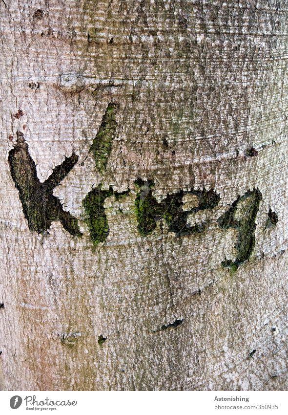 ...ich noch einen Keks? Umwelt Natur Pflanze Baum Wald Holz schreiben bedrohlich trist braun schwarz Angst Zukunftsangst gefährlich Krieg Furche einritzen