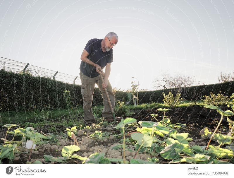 Alcatraz Garten Gartenarbeit Außenaufnahme grün Tag Blume Natur Gärtner Farbfoto Sommer Mann 50 plus Freizeit & Hobby Umwelt Erde Beet umgraben